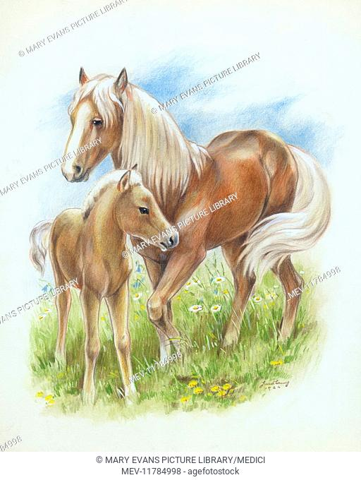Mare and Foal in a meadow with wild flowers