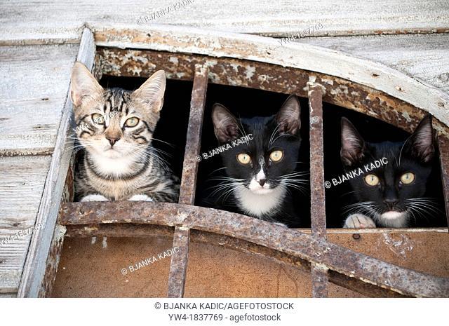 Three cats, Bakar, Croatia