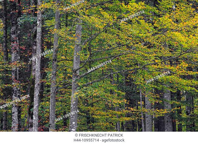 Alpstein, Detail, Part, tree, trunk, trunks, leaf, leaves, trees, autumn, autumn foliage, background, foliage, Switzerland, Europe, St
