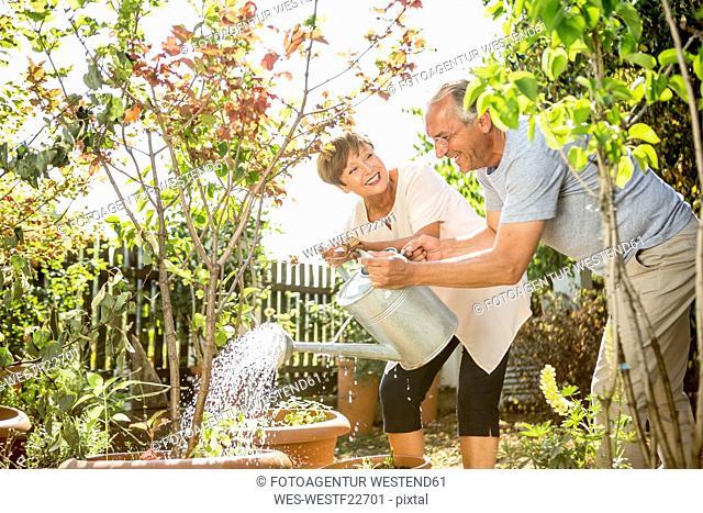 Happy senior couple in garden watering plants together