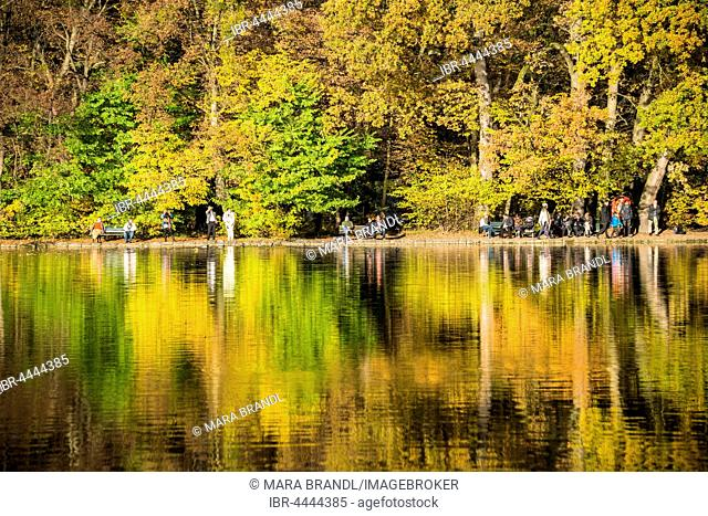 Trees with autumn leaves reflected in Lake Burger, Castle Garden, Nymphenburg Park, Munich, Bavaria, Upper Bavaria, Germany
