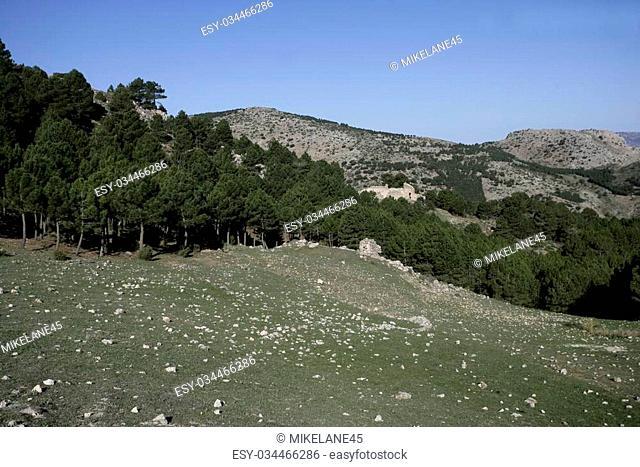 Espuna mountain, National Park, Murcia, Spain, Pine woodlands