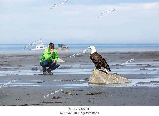 Man photographs a Bald Eagle perched on a rock, Bishop's Beach, Anchor Point, Southcentral Alaska, USA