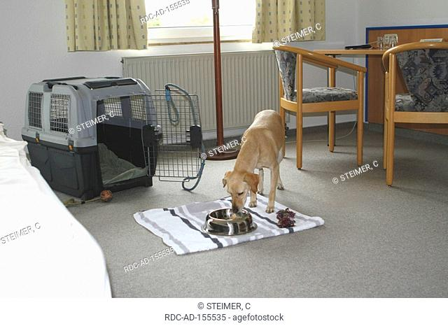 Mixed Breed Dog in kennel hotel room