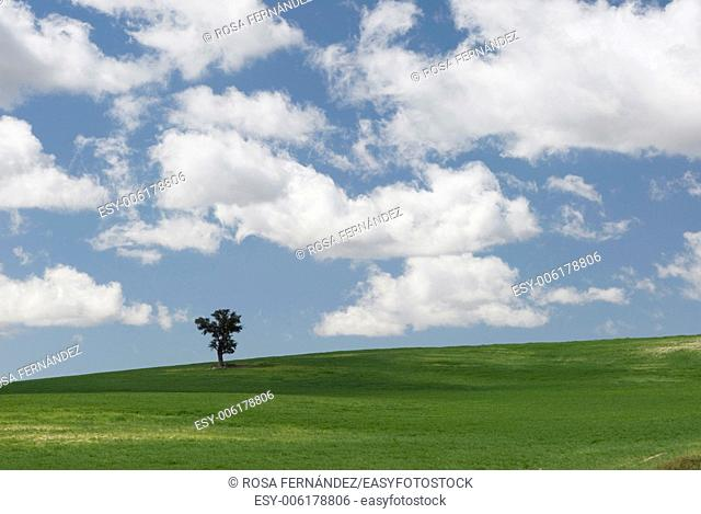 Field with a solitary tree, Marid, Spain