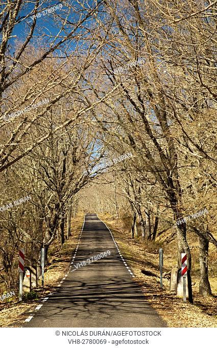 Country road through oak trees in winter. Villuercas Range, Hospital del Obispo road port. Cáceres province, Extremadura, Spain