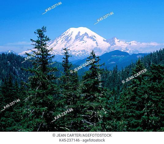 Mount Rainier with conifer trees, Gifford Pinchot National Forest, Washington, USA