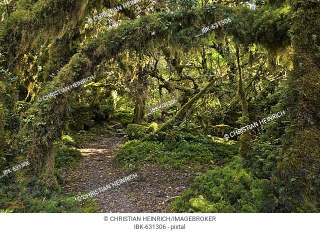 Forest Bosque Encantada, Patagonia, Chile, South America