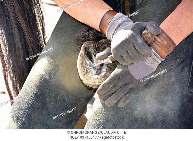 Blacksmith, or equine farrier