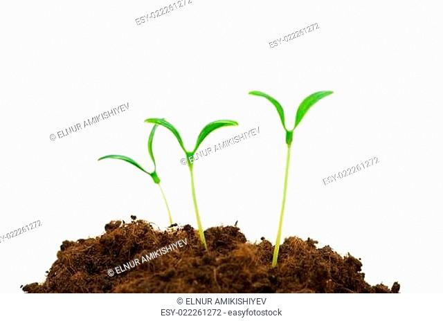 Green seedlings illustrating the concept of new life