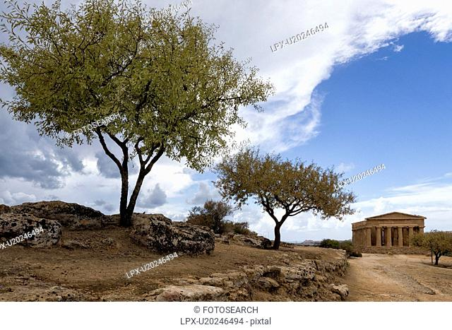 Greek temple with olive trees, Agrigento, Sicily, Italy