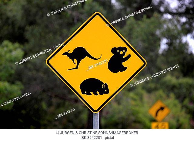 Warning sign, koala, wombat, kangaroo, Victoria, Australia