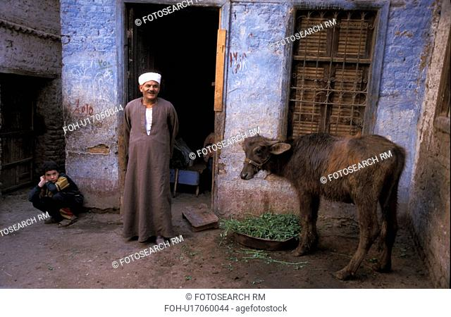 person, cow, egypt, 5725, people