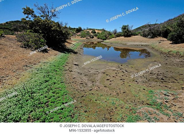 Drought in chapparel, Las Padres National Forest, California, USA