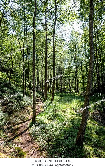 Idyllic hiking trail in Almindingen north of Lilleborg, Europe, Denmark, Bornholm