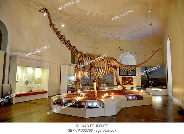 Dinosaur fossil on display inside the National Museum of Quinta da Boa Vista linked to UFRJ in the São Cristóvão neighborhood, Rio de Janeiro, Rio de Janeiro