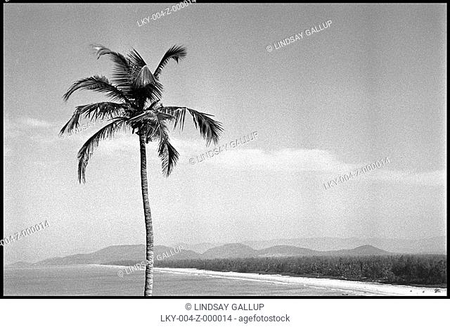 Lone palm tree above a beach and mountains