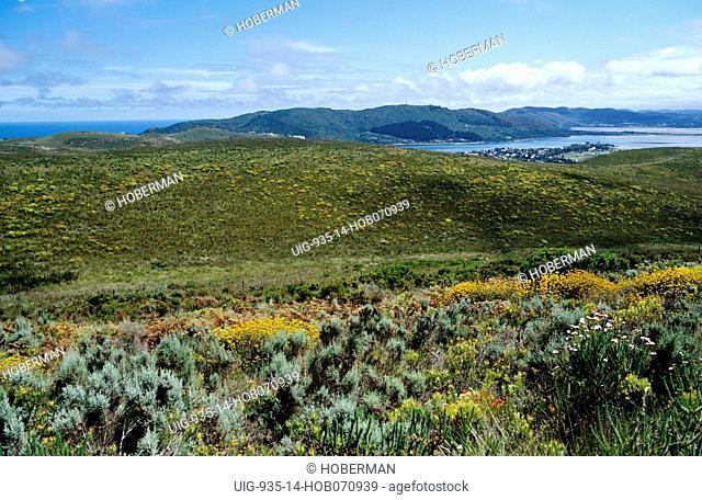 Fynbos, Knysna, Western Cape