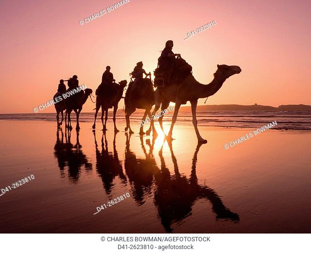 Morocco, Essaouira beach camel trek
