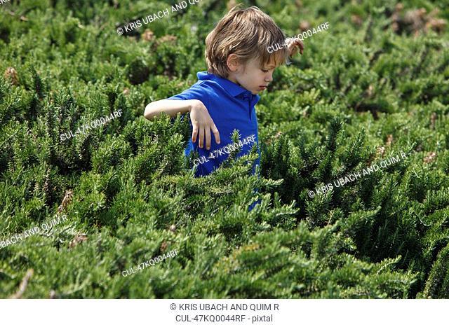Boy wading through shrubs outdoors