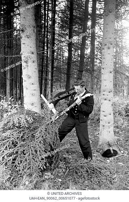 Wood - Holzfäller bei der Arbeit