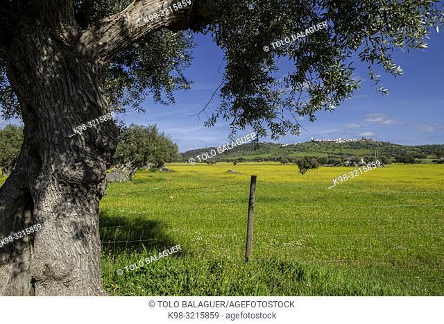 olivar da Pega, Monsaraz, , Portugal