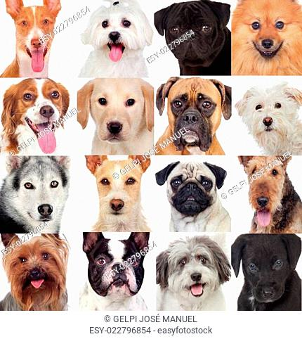 Collage with many dogs