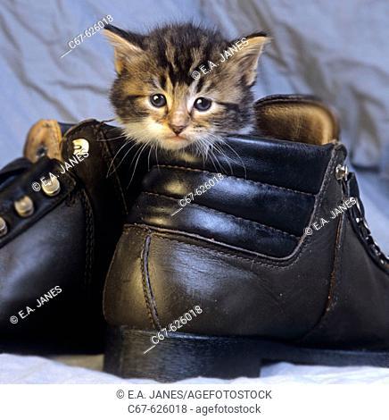 Kitten & Boots