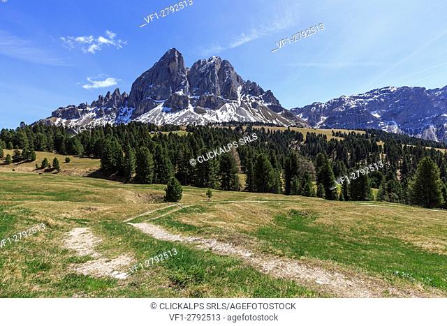 Sass de Putia in background enriched by green woods. Passo delle Erbe. Puez Odle South Tyrol Dolomites Italy Europe