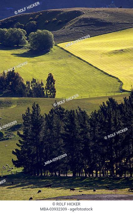 New Zealand, South-island, Central Otago, Kawarau-Valley, field-landscape, destination, landscape, hills, fields, meadows, trees, nature, vegetation, sunny