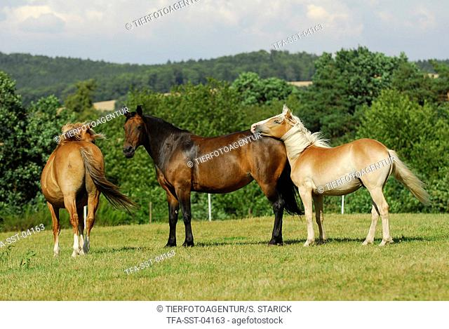 horses on meadow