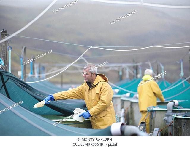 Workers feeding fish in farm