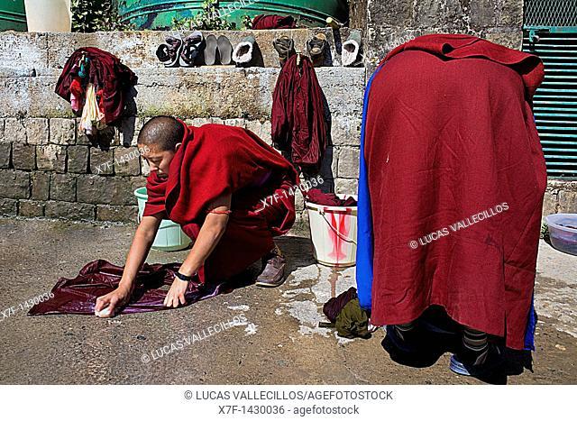 nuns washing clothes, in Geden Choeling Nunnery, McLeod Ganj, Dharamsala, Himachal Pradesh state, India, Asia