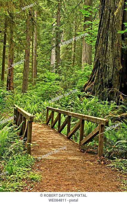 A bridge in Prairie Creek Redwoods State Park, Califonria