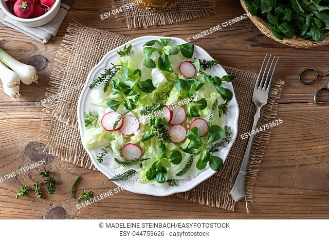 Spring salad with wild edible plants - chickweed, bedstraw and young yarrow leaves