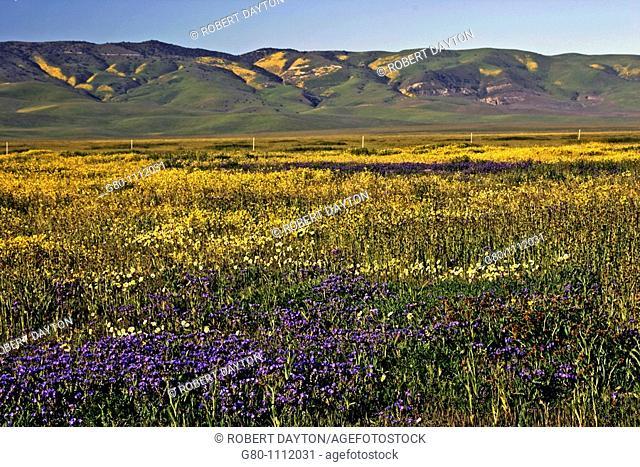 Spring on the Carrizo Plain, Southern California