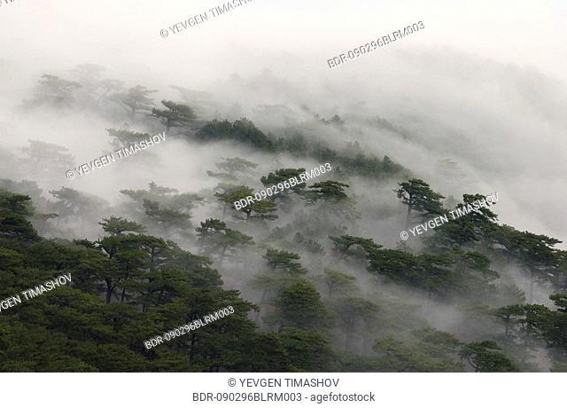 fog covered forest on ai-petri mountain on crimea