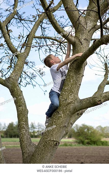 Germany, Brandenburg, boy climbing on a tree