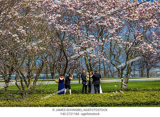 Magnolia Trees in bloom in gardens surrounding the Floral Showhouse in Niagara Falls Ontario Canada
