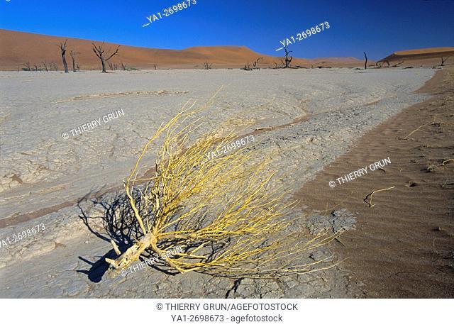 Namibia, Namib-Naukluft National park, Sossusvlei, Dead vlei, clay pan
