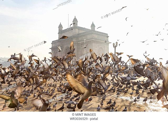 Large flock of pigeons on open space with arch monument in background