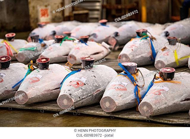 Frozen tuna at Tsukiji fish market, Tokyo, Japan