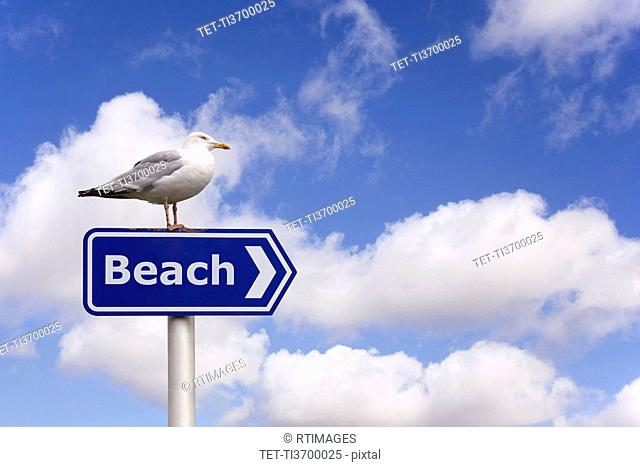 Pigeon standing on beach sign