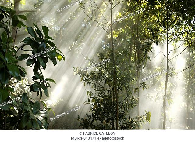 Costa Rica - Guanacaste - Rincon de la Vieja national park