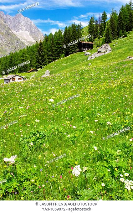 Switzerland Valais Val Ferret  A wood cabin within a wild flower meadow against a dramatic mountain backdrop near La Fouly