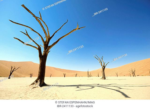 Dead trees on parched clay pan in front of red dunes