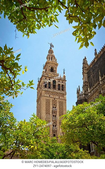 Patio de los Naranjos in the Cathedral (Seville)