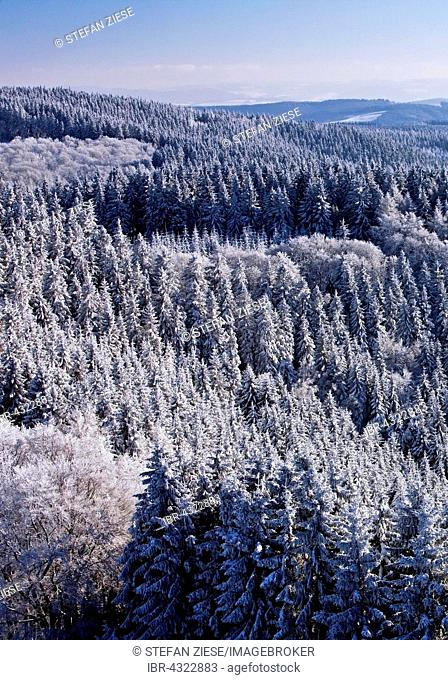 View of snowy trees in Sundern, Sauerland, North Rhine-Westphalia, Germany