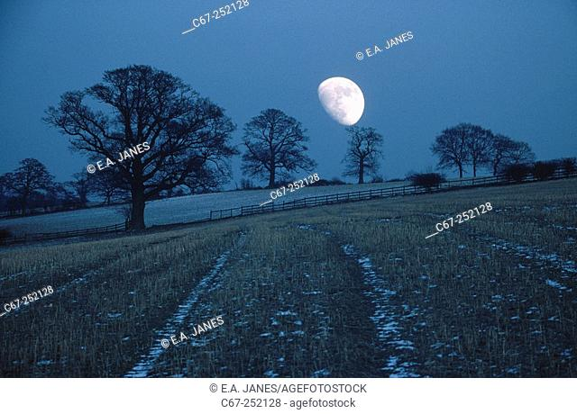 Moonrise over oaks. Herts. UK