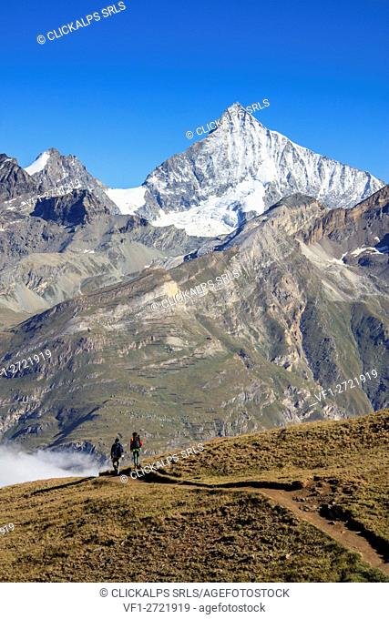 Hikers proceed towards the high peak of Dent Herens in a clear summer day Gornergrat Canton of Valais Switzerland Europe